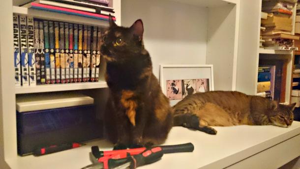 Krivankova_kočky